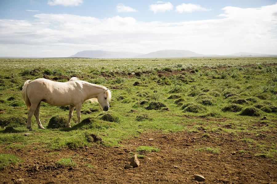 Horse Stands In Open Field Photograph by Zack Seckler