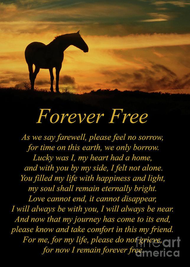 Horse Tribute Memorial For Horse With Original Poem ...