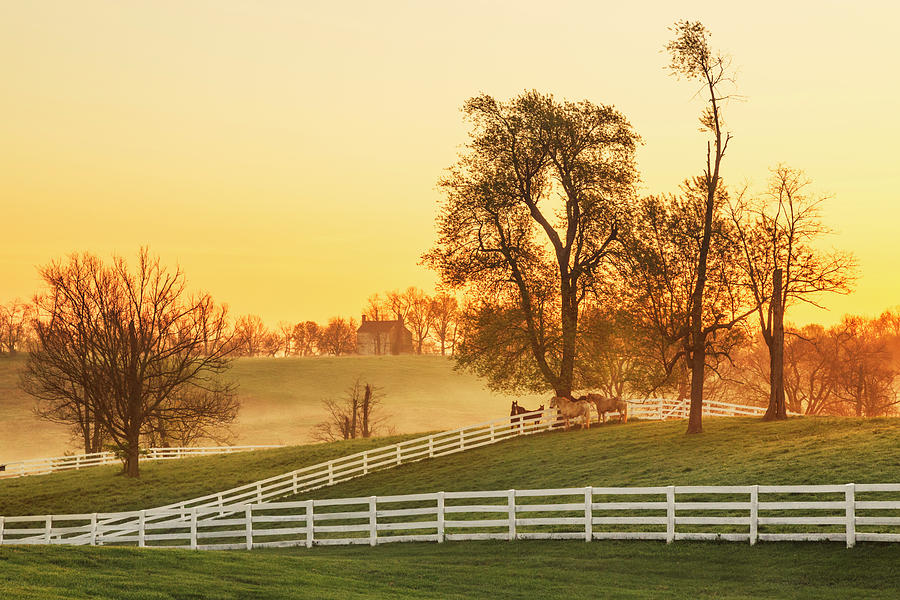 Adam Jones Photograph - Horses At Sunrise, Shaker Village by Adam Jones