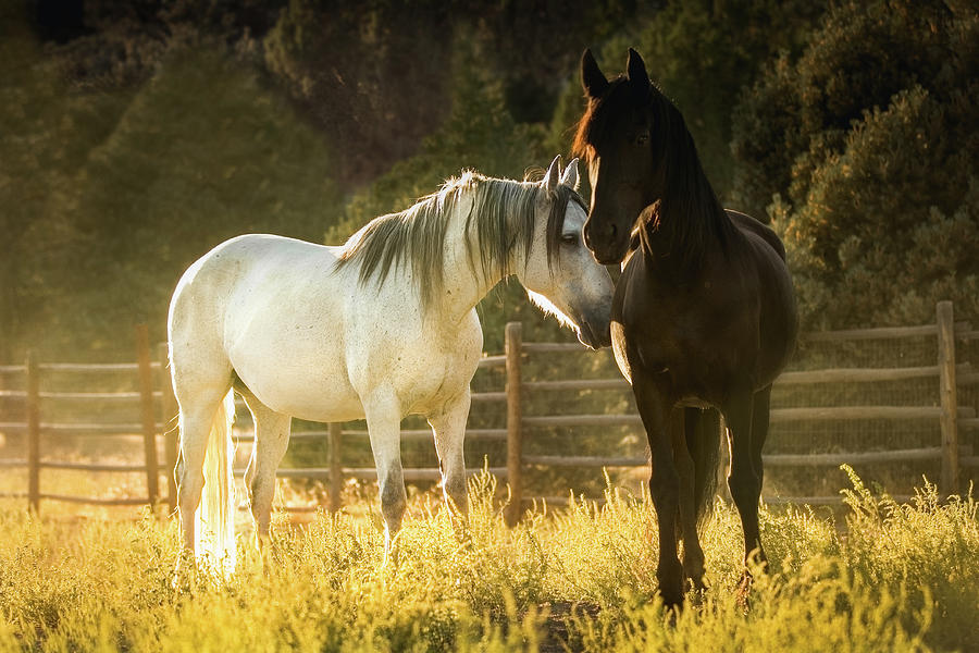 Horses at Sunset by Anett Mindermann
