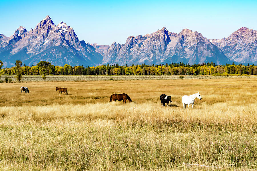 Horses At The Grand Teton Mountains Pastel