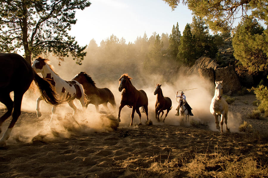Horses Being Chased By Cowboy Through Photograph by Garyalvis
