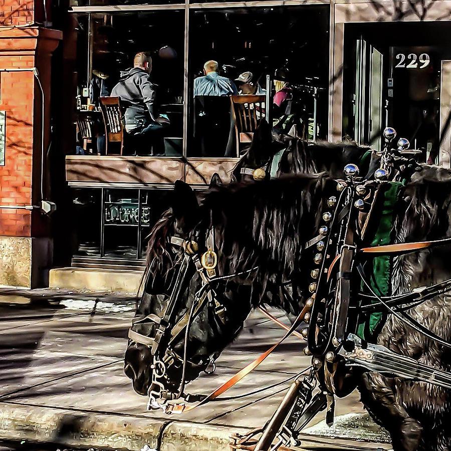 022 - Horses by David Ralph Johnson