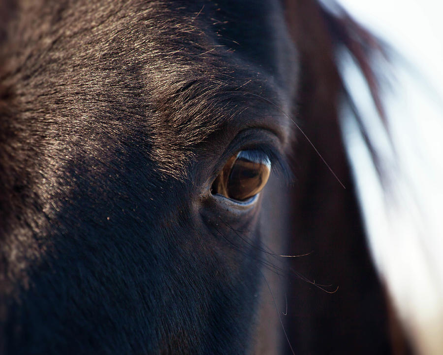 Horses Eye Photograph