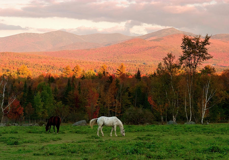 Horses Grazing During The New England Photograph by Myloupe/uig