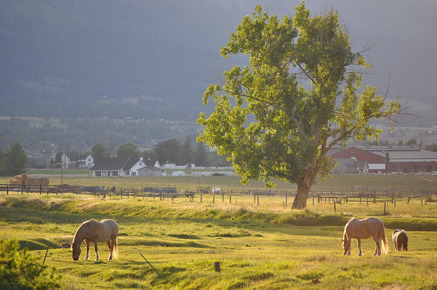 Horses Grazing by Mike Helland