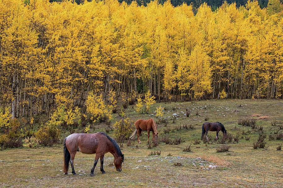 Horses in Autumn by Darlene Bushue