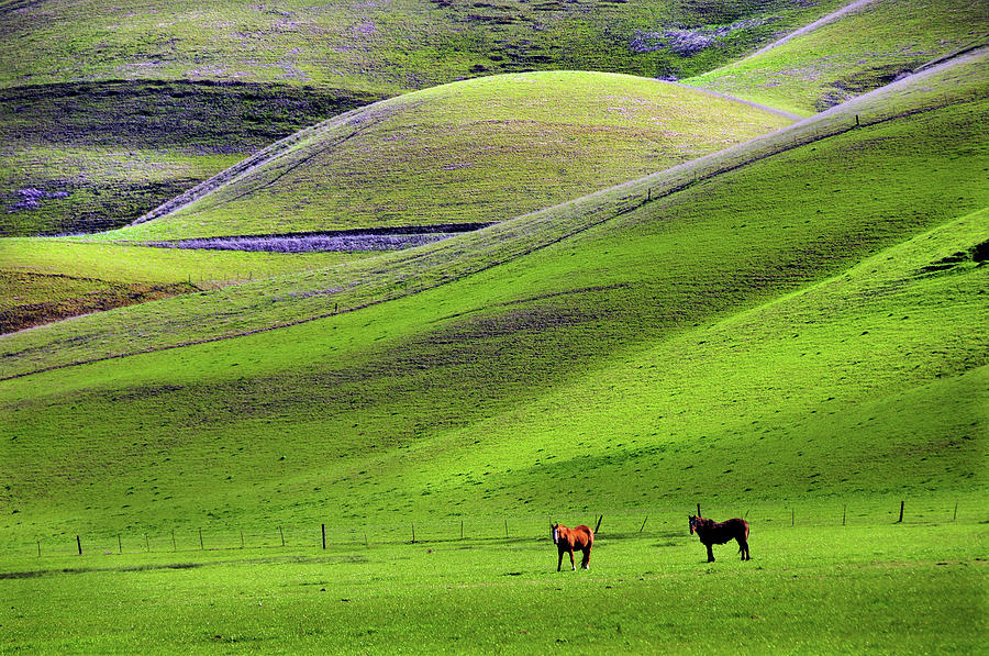 Horses In Hill Country Photograph by Mitch Diamond