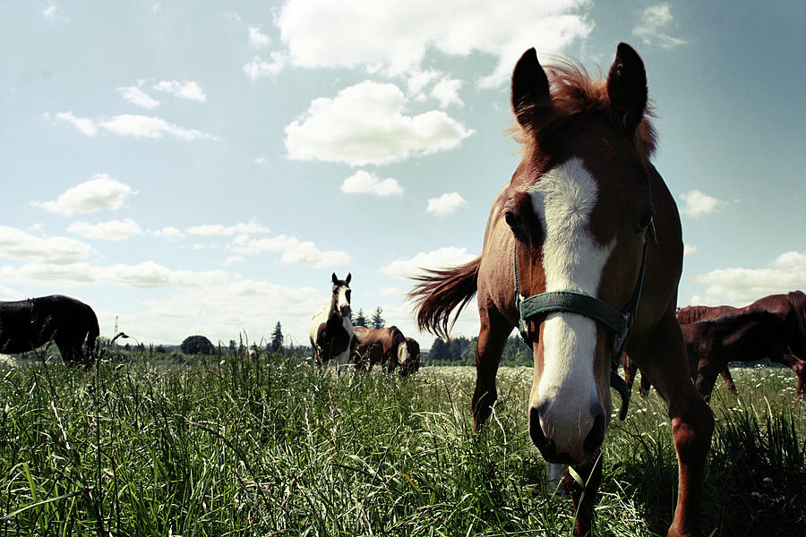 Horses In Large Field Photograph by Kevinruss