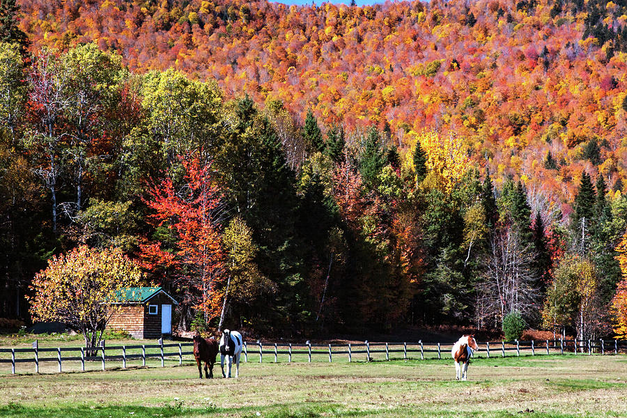 Horses in New Hampshire Autumn by Jeff Folger