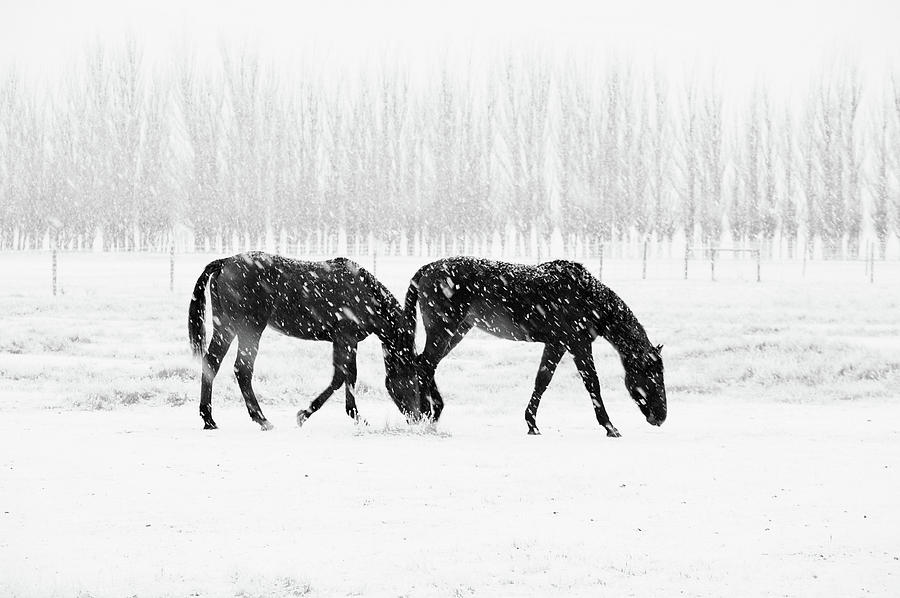 Horses In Snow Photograph by Mark Meredith
