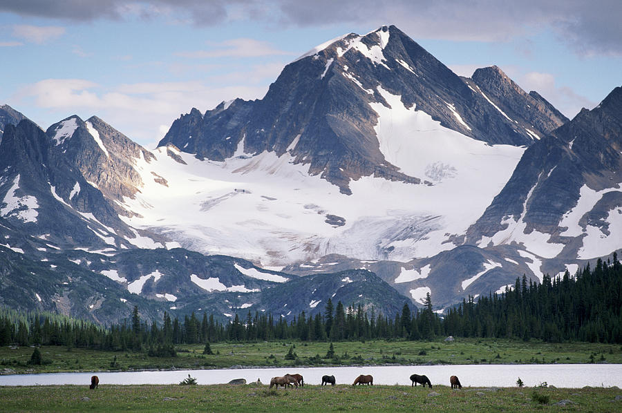 Horses In Tonquin Valley, Jasper Photograph by Art Wolfe