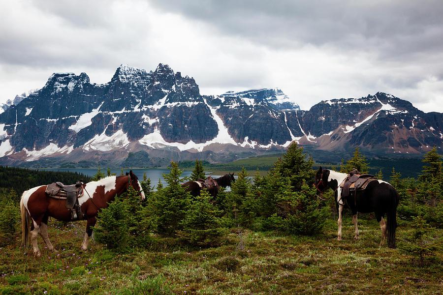 Horses, Jasper National Park, Alberta Photograph by Mint Images/ Art Wolfe