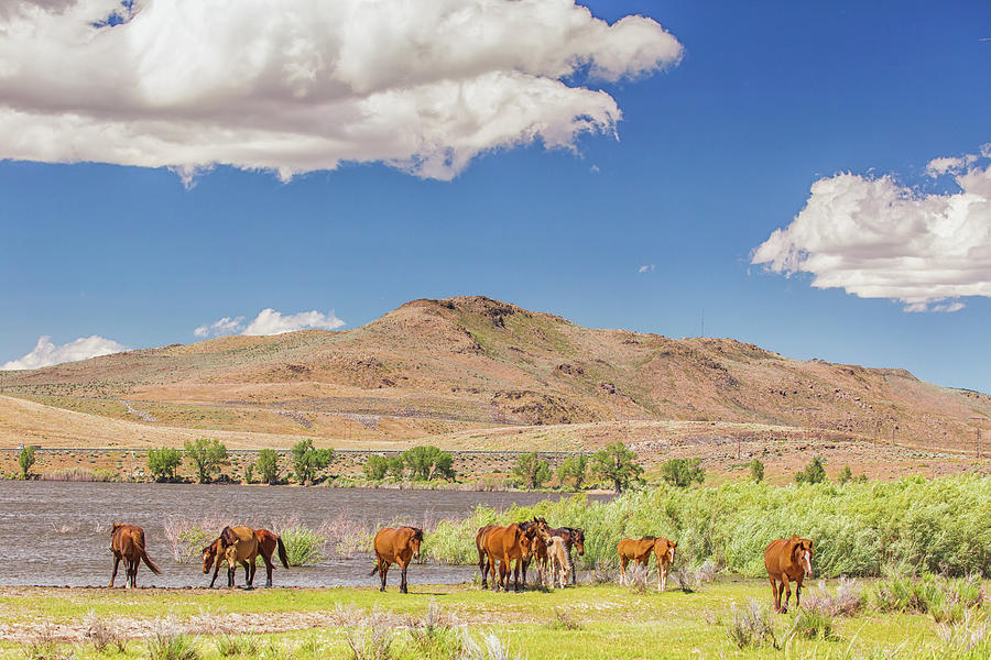Horses on the Shoreline by Marc Crumpler