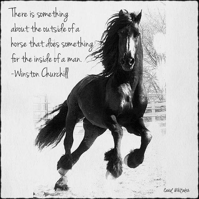 Horse's Profound Spirit  by Carol Whitaker