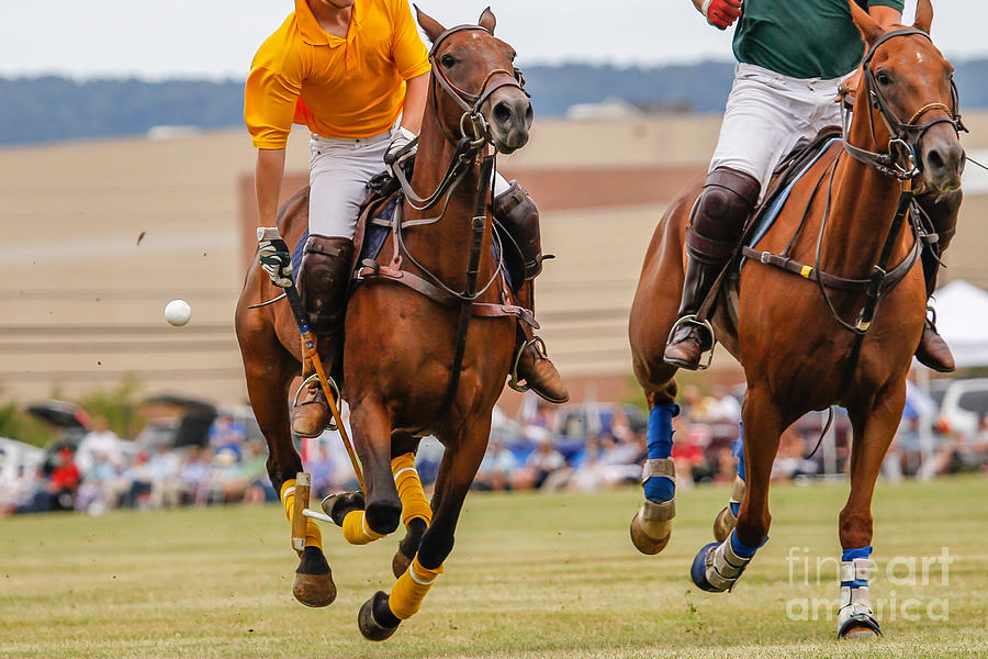 Equestrian Photograph - Horses Running In A Polo Match by Hutch Photography