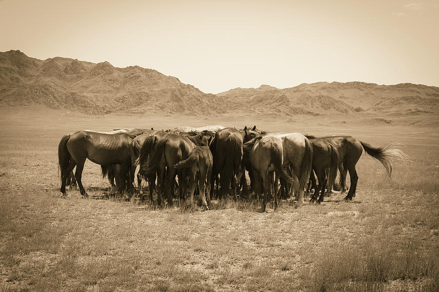 horses, steppe, kazakh, wild, free, idyllic, nature, animals, gr by Kim Vermaat