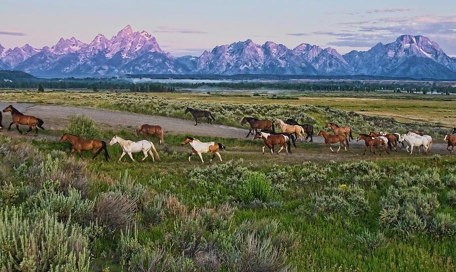 Horses Walk Photograph by Jeff R Clow