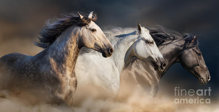 Strong Photograph - Horses With Long Mane Portrait Run by Callipso