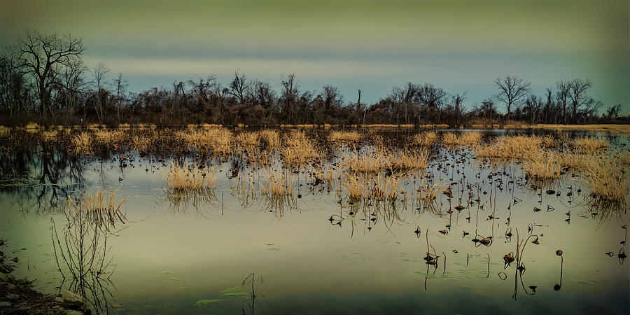 Horseshoe Lake IL-with grunge filter GRK2074_01042019 by Greg Kluempers