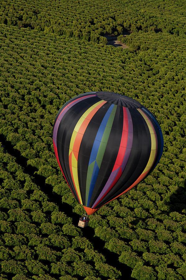 Hot Air Balloon Photograph by Holly Harris