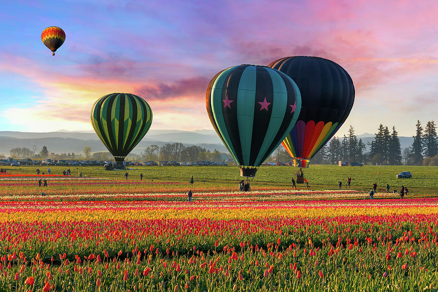 Hot Air Balloons At Sunrise Photograph by David Gn Photography