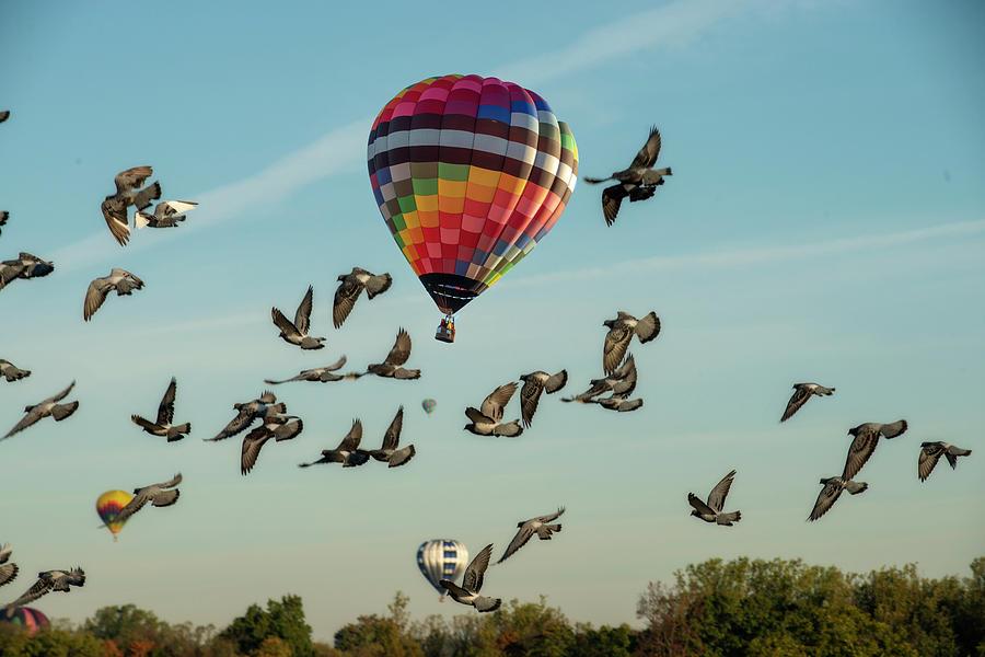 Hot Air Balloons Morgantown birds by Dan Friend