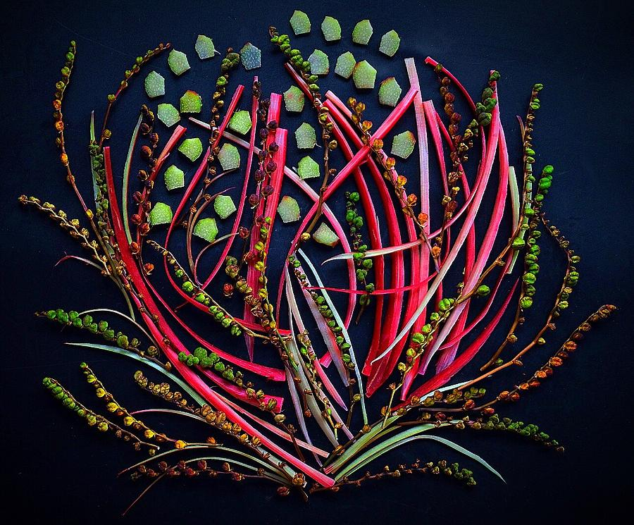 Hothouse Rhubarb Flower by Sarah Phillips
