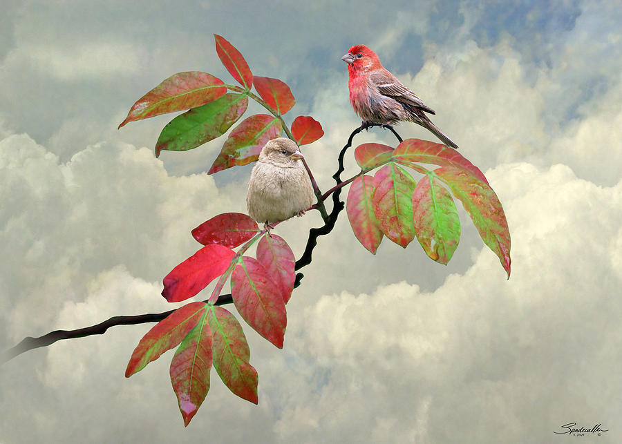 House Finches In Autumn by Spadecaller