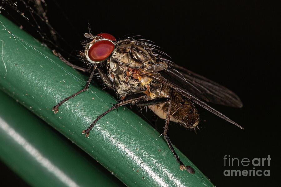 House Fly by Brian Roscorla