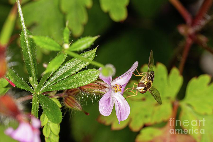 Hover Fly by Brian Roscorla