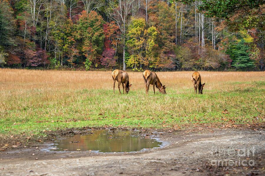 How I Shoot Elk by Cathy Donohoue