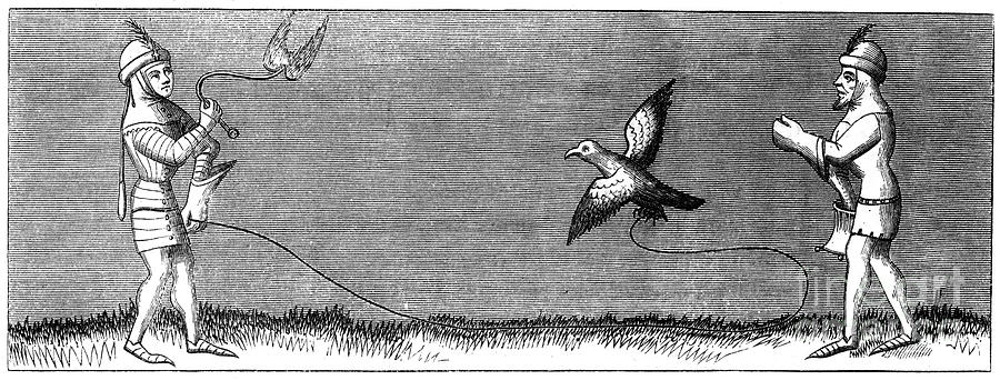 How To Train A Young Falcon, 14th Drawing by Print Collector