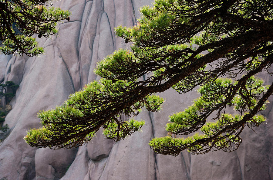 Huang Shan Landscape, China Photograph by Mint Images/ Art Wolfe