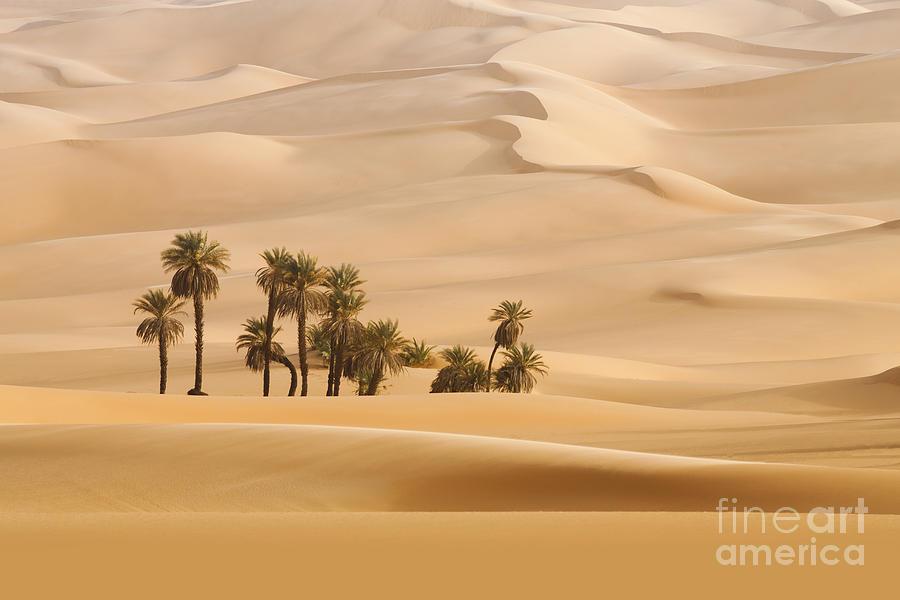 Shadow Photograph - Huge Dunes Of The Desert. Fine Place by Denis Burdin