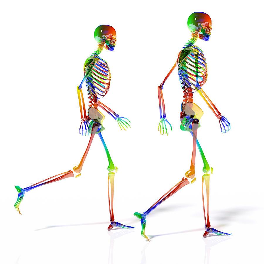 Human Digital Art - Human Skeleton Pair by Betsy Knapp