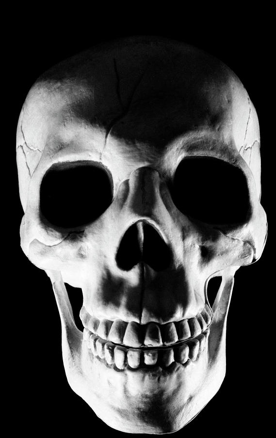 Skull Photograph - Human Skull by Lonnie Paulson