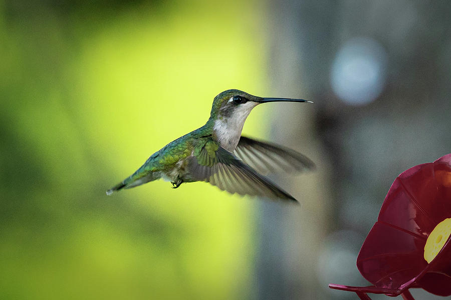 Hummer 4 by David Heilman