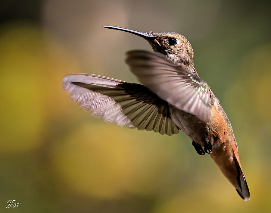 Hummer 4 by Endre Balogh