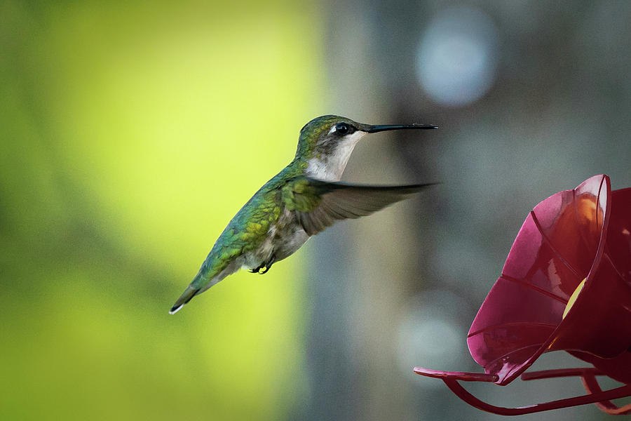 hummer 5 by David Heilman