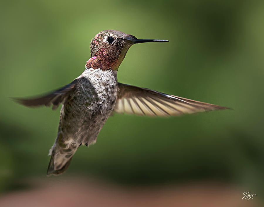 Hummer 5 by Endre Balogh