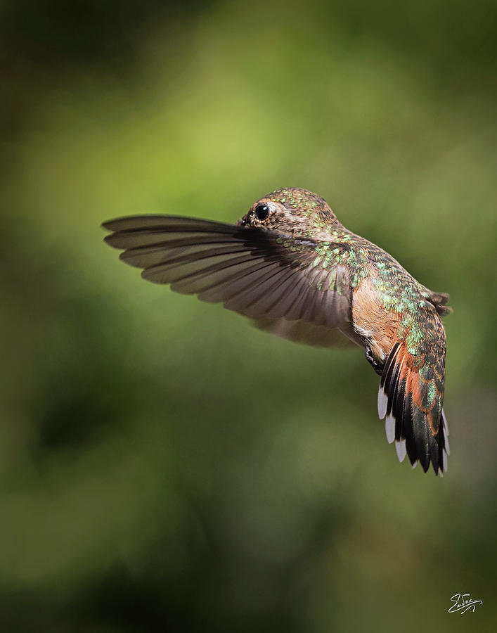 Hummer 8 by Endre Balogh