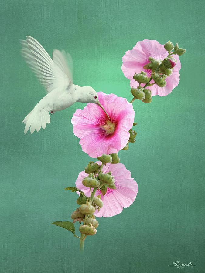 Hummingbird And Malva Wildflower by M Spadecaller