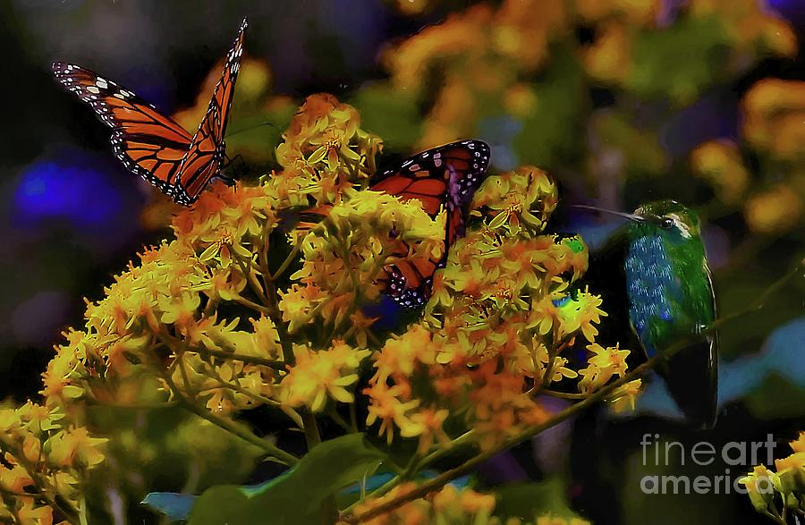 hummingbird and monarch by John Kolenberg