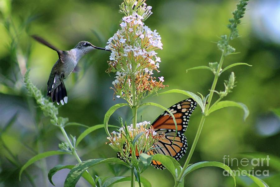 Hummingbird Photograph - Hummingbird And Monarch by Karen Adams