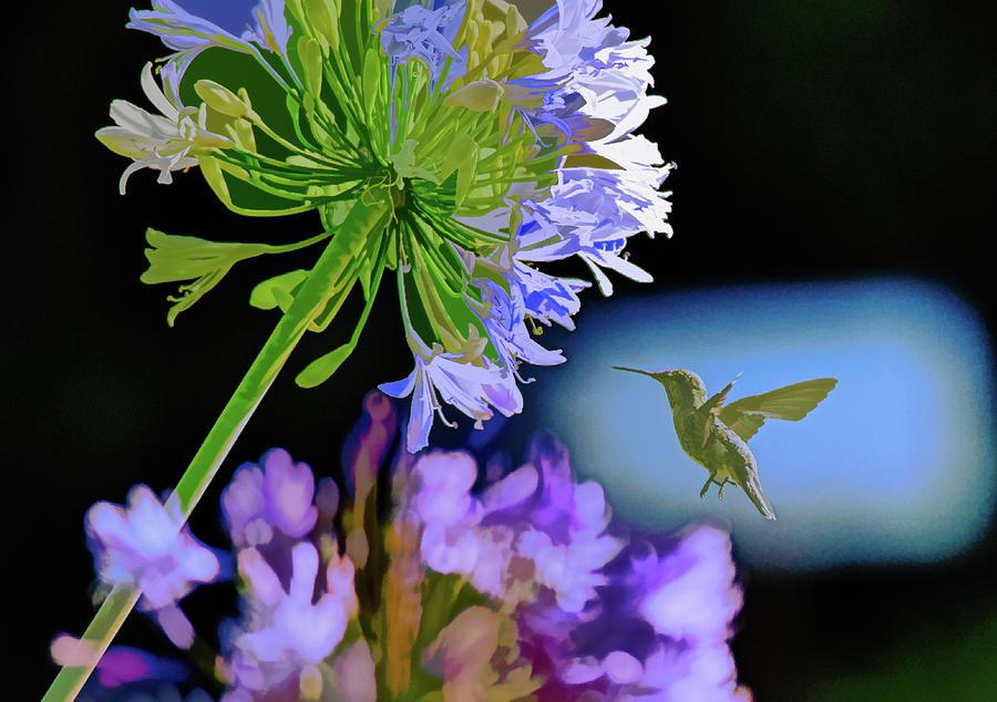 Hummingbird At Agapanthus Abstract 2 Mixed Media