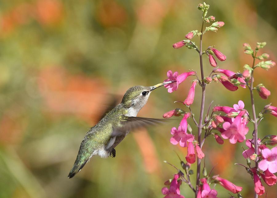 Hummingbird Buffet 2 by Fraida Gutovich