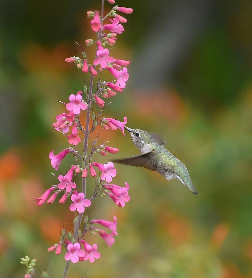 Hummingbird Buffet 4 by Fraida Gutovich