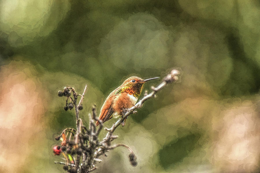 Hummingbird Contemplation 1 Abstract Impression by Linda Brody