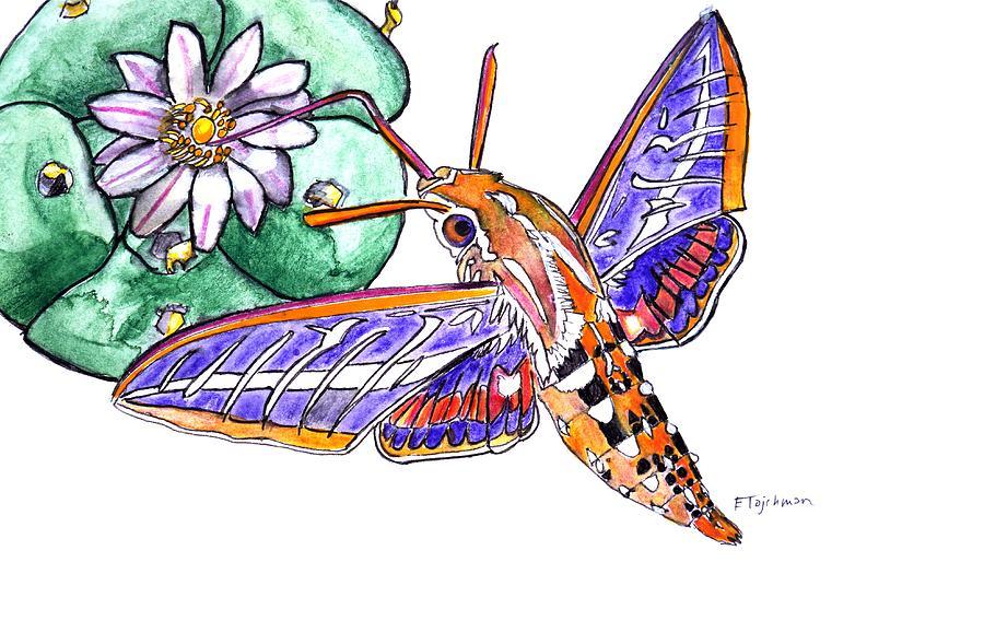 Hawkmoth Painting - Hummingbird Moth And Cactus by Ed Tajchman